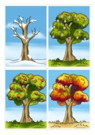 Времена года зима весна лето осень (3)