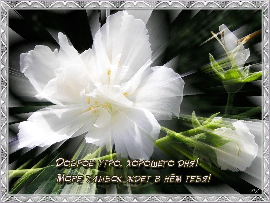 Доброе утро друзья розы красивые открытки и гифы анимированные007