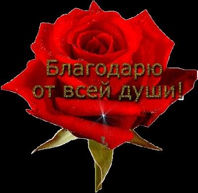 Доброе утро друзья розы красивые открытки и гифы анимированные012