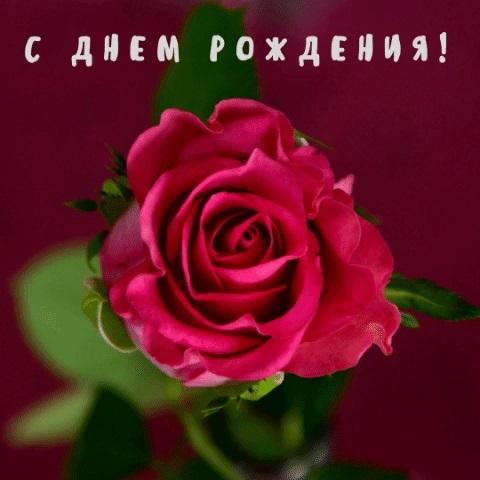 Доброе утро друзья розы красивые открытки и гифы анимированные023