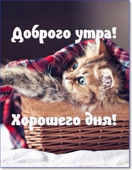 доброе утро мой котик картинки мужчине прикольные