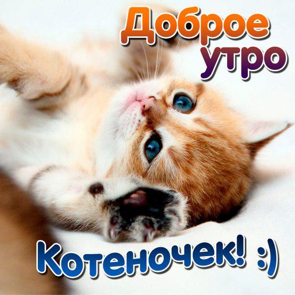 Картинки с котятами доброе утро любимая прикольные, котенком надписью