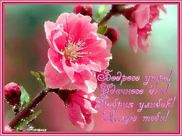 Доброе утро любимая картинки с надписями романтические014