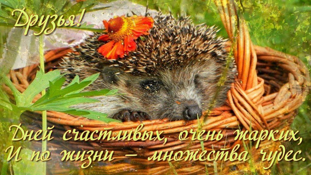 Доброе утро осенью для друзей - картинки и открытки (13)