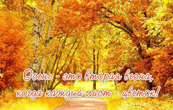 Доброе утро осень - очень красивые открытки (8)
