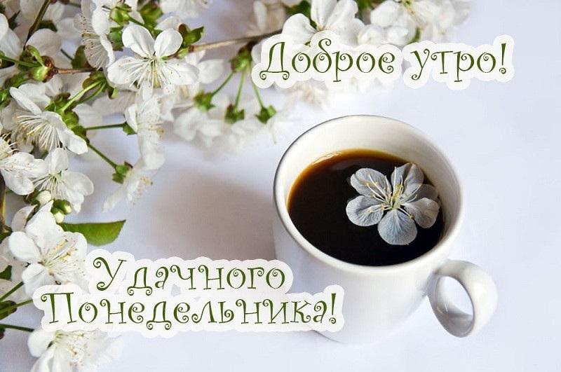 Доброе утро понедельника картинки красивые с надписью013