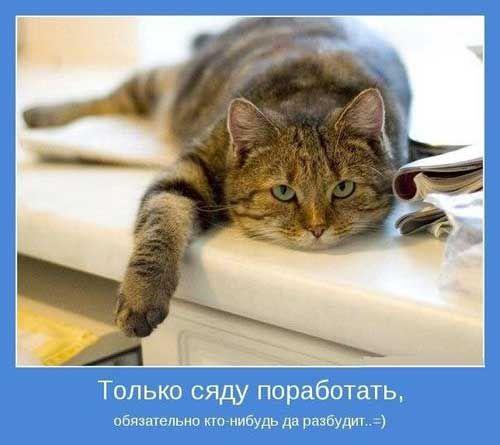 Забавные и прикольные картинки про утро (14)