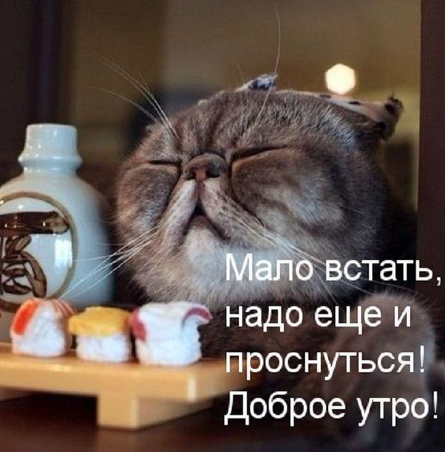 Забавные и прикольные картинки про утро (25)