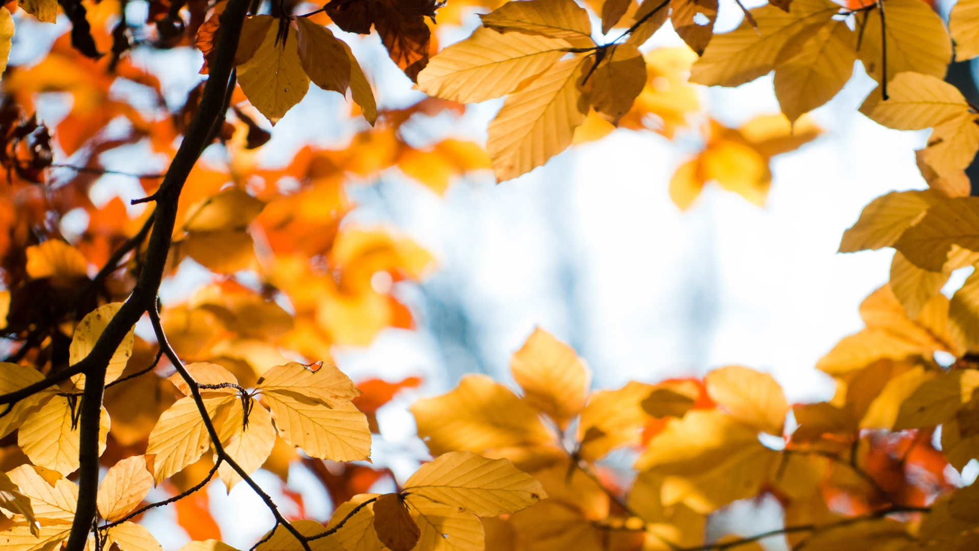Золотая осень картинки на рабочий стол высшего качества017