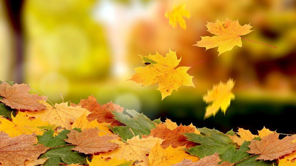 Золотая осень картинки на рабочий стол высшего качества026