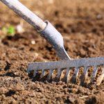 Как выбрать место и подготовить почву для посадки картофеля?
