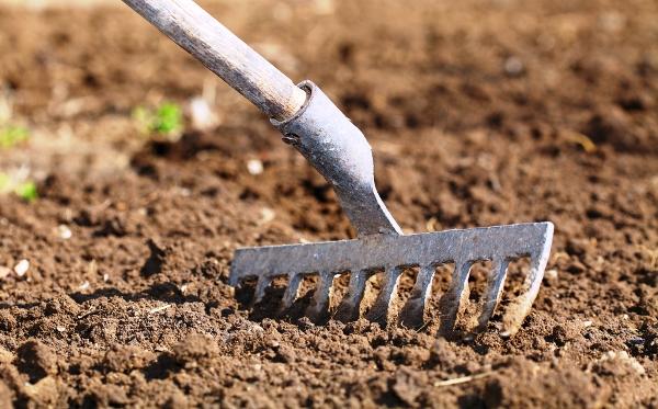 Как выбрать место и подготовить почву для посадки картофеля