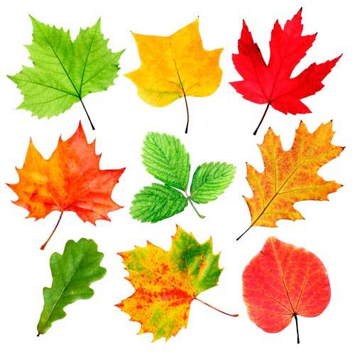 Как нарисовать вазу с осенними листьями поэтапно - подборка (12)