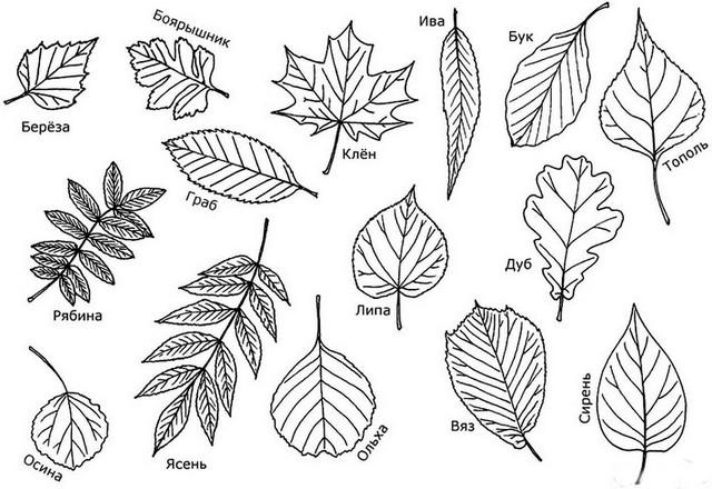 Как нарисовать вазу с осенними листьями поэтапно - подборка (28)