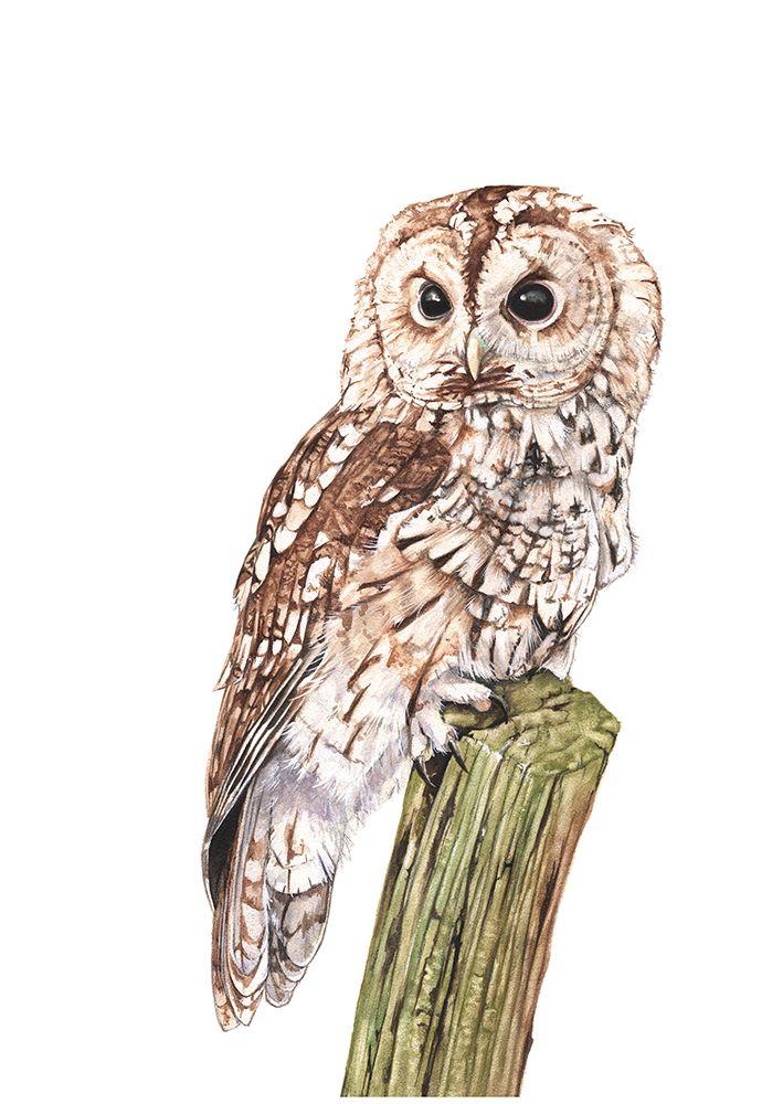 Как раскрасить гуашью сову - идеи и картинки (8)