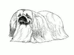Как рисовать пекинеса - красивые идеи в картинках (19)