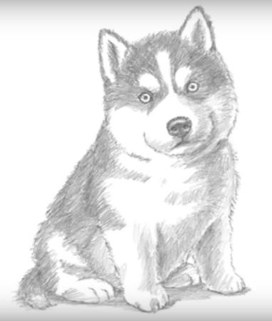 Как рисовать пекинеса - красивые идеи в картинках (28)