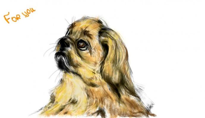 Как рисовать пекинеса - красивые идеи в картинках (6)
