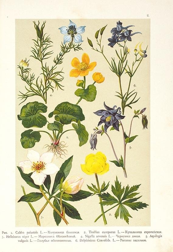 Картинки ботанический атлас растений001