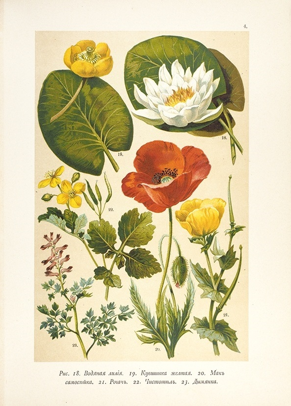 Картинки ботанический атлас растений002
