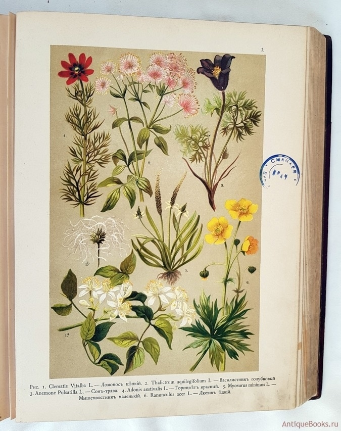 Картинки ботанический атлас растений003