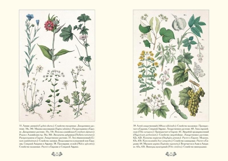 Картинки ботанический атлас растений004