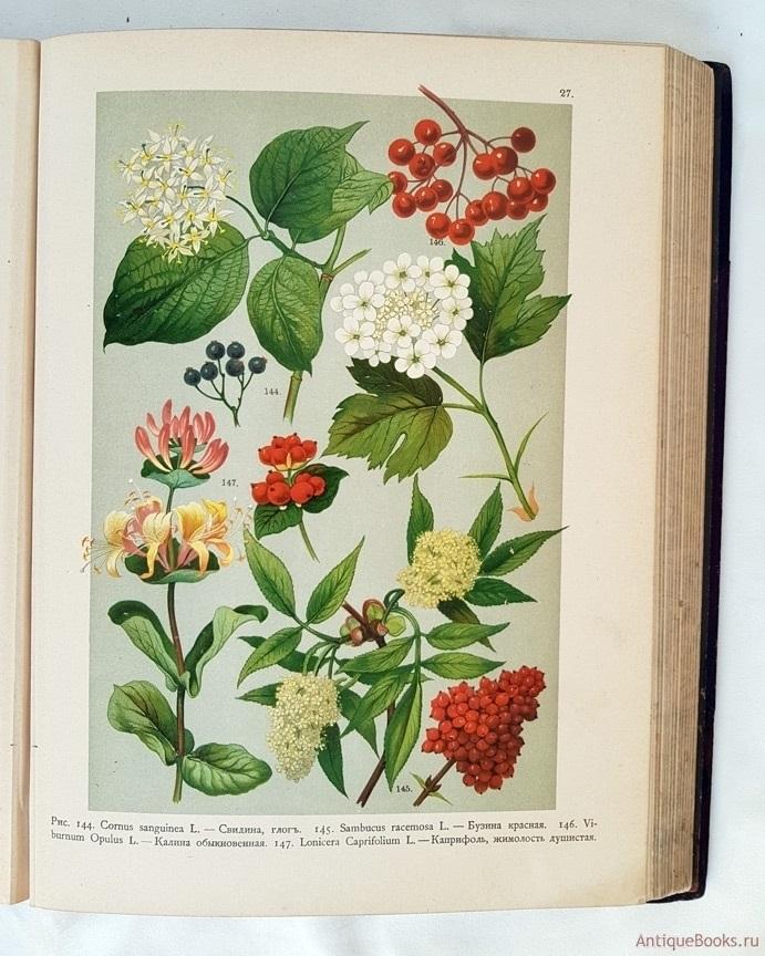 Картинки ботанический атлас растений006