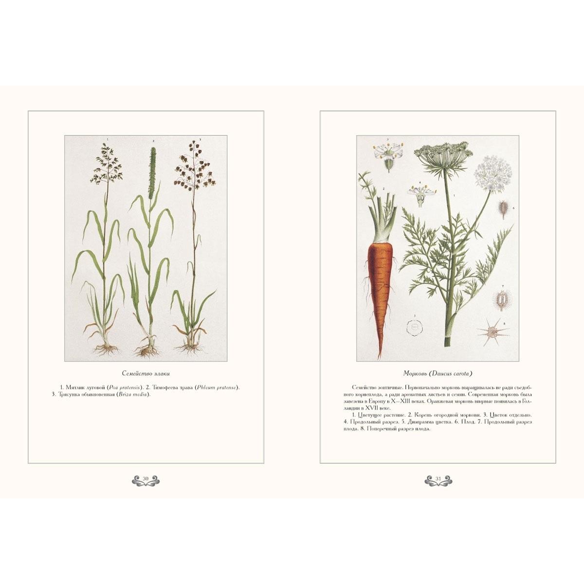 Картинки ботанический атлас растений007