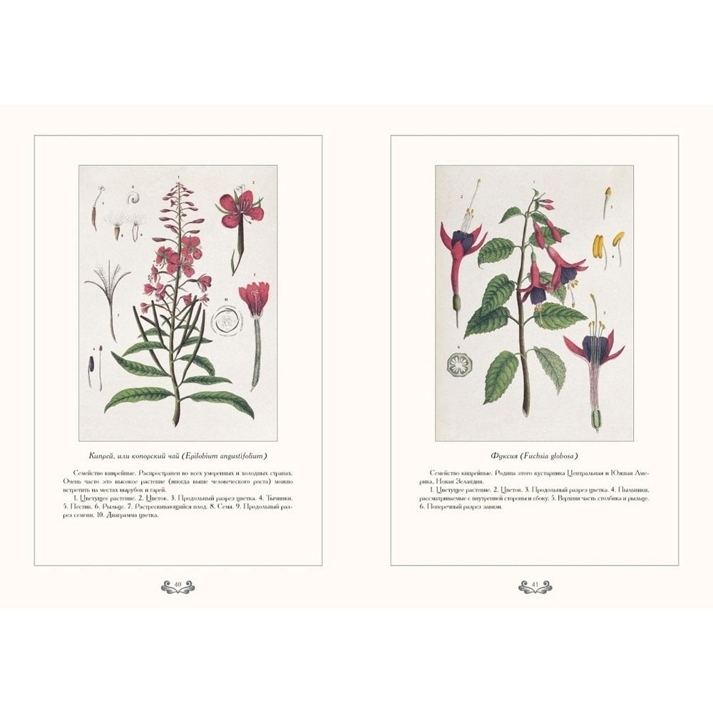 Картинки ботанический атлас растений008
