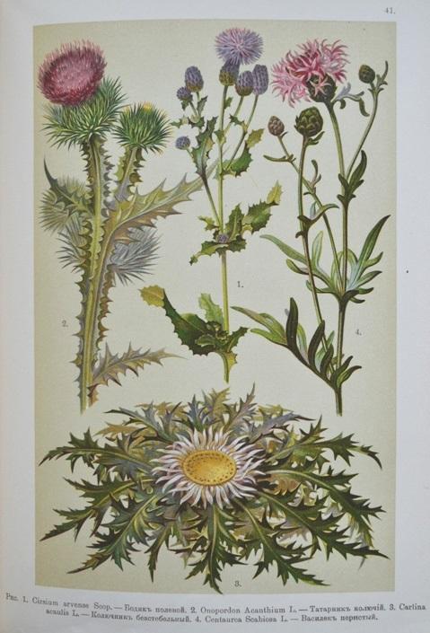 Картинки ботанический атлас растений009
