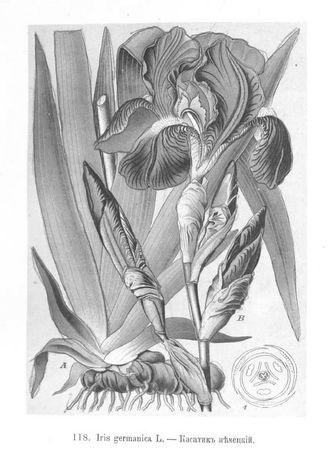 Картинки ботанический атлас растений011