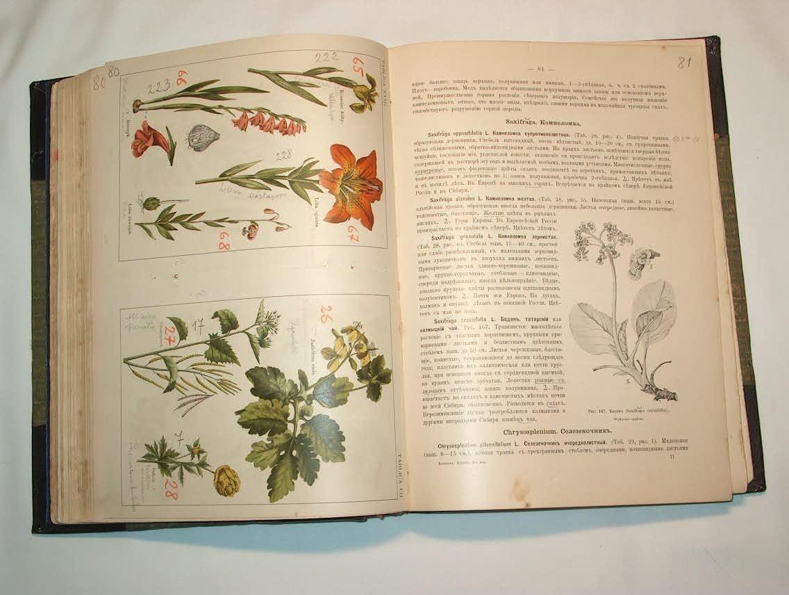 Картинки ботанический атлас растений012