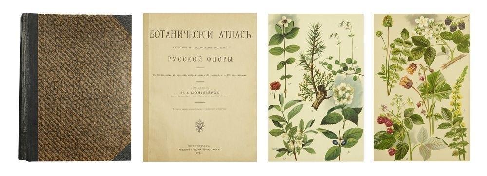 Картинки ботанический атлас растений015
