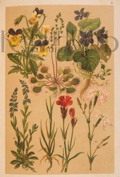 Картинки ботанический атлас растений016