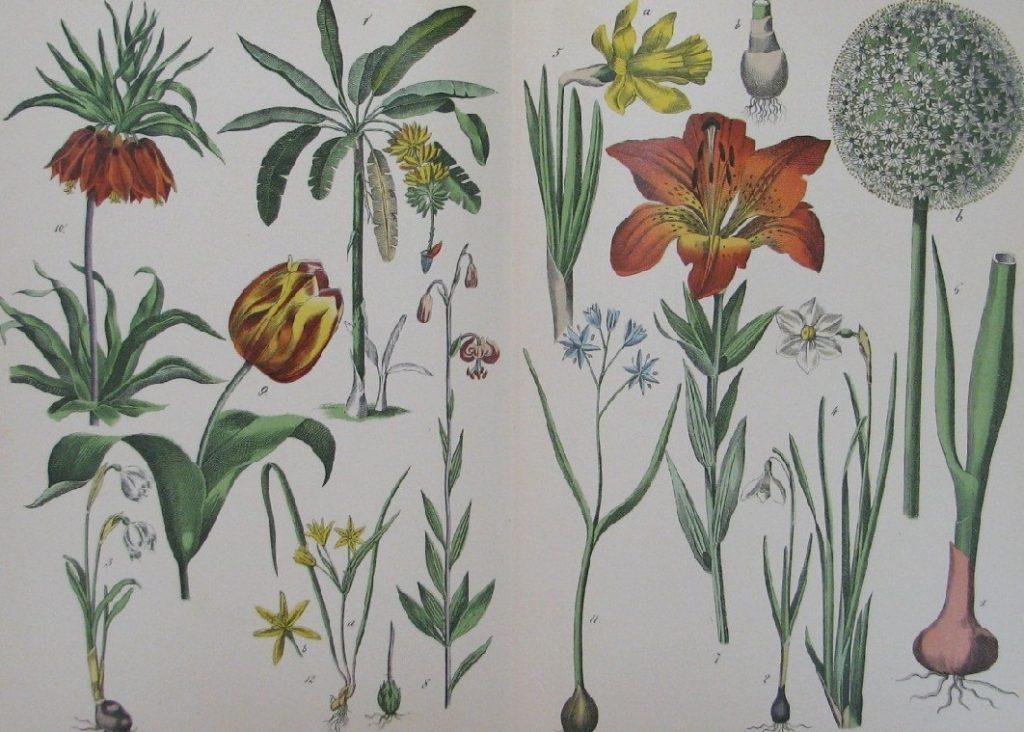 Картинки ботанический атлас растений017