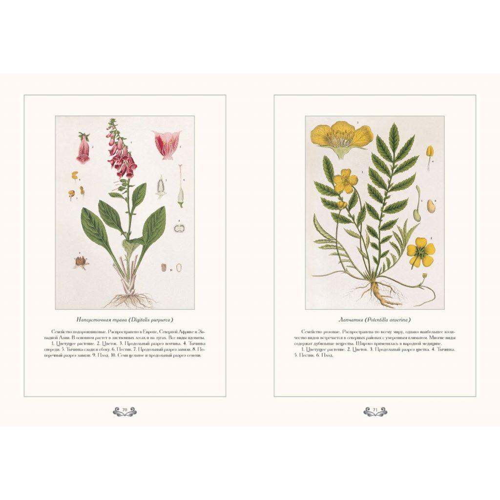 Картинки ботанический атлас растений018