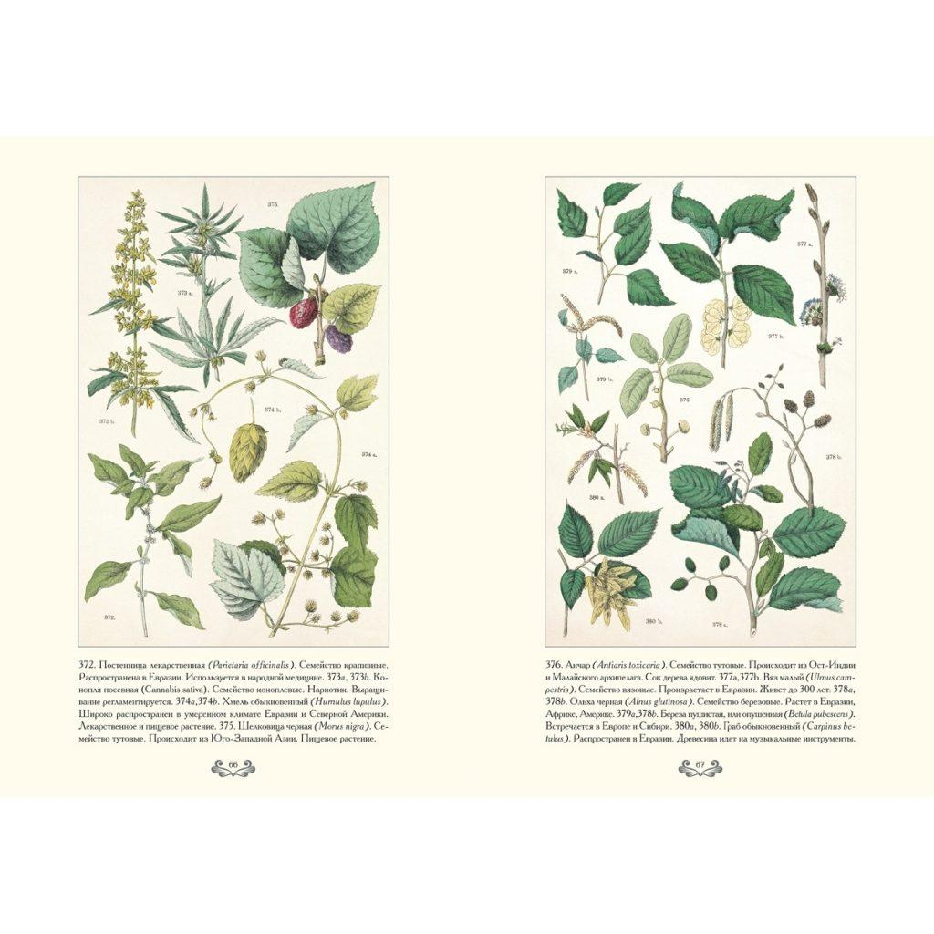 Картинки ботанический атлас растений019