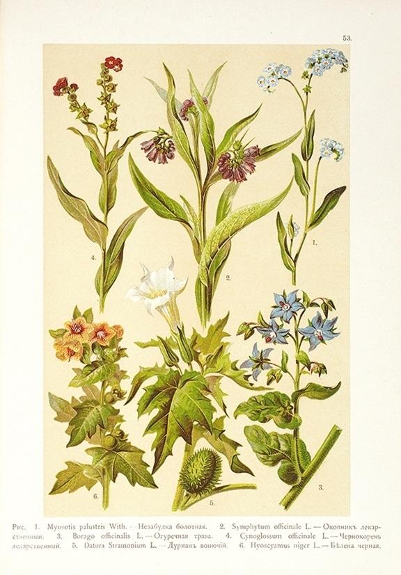 Картинки ботанический атлас растений020