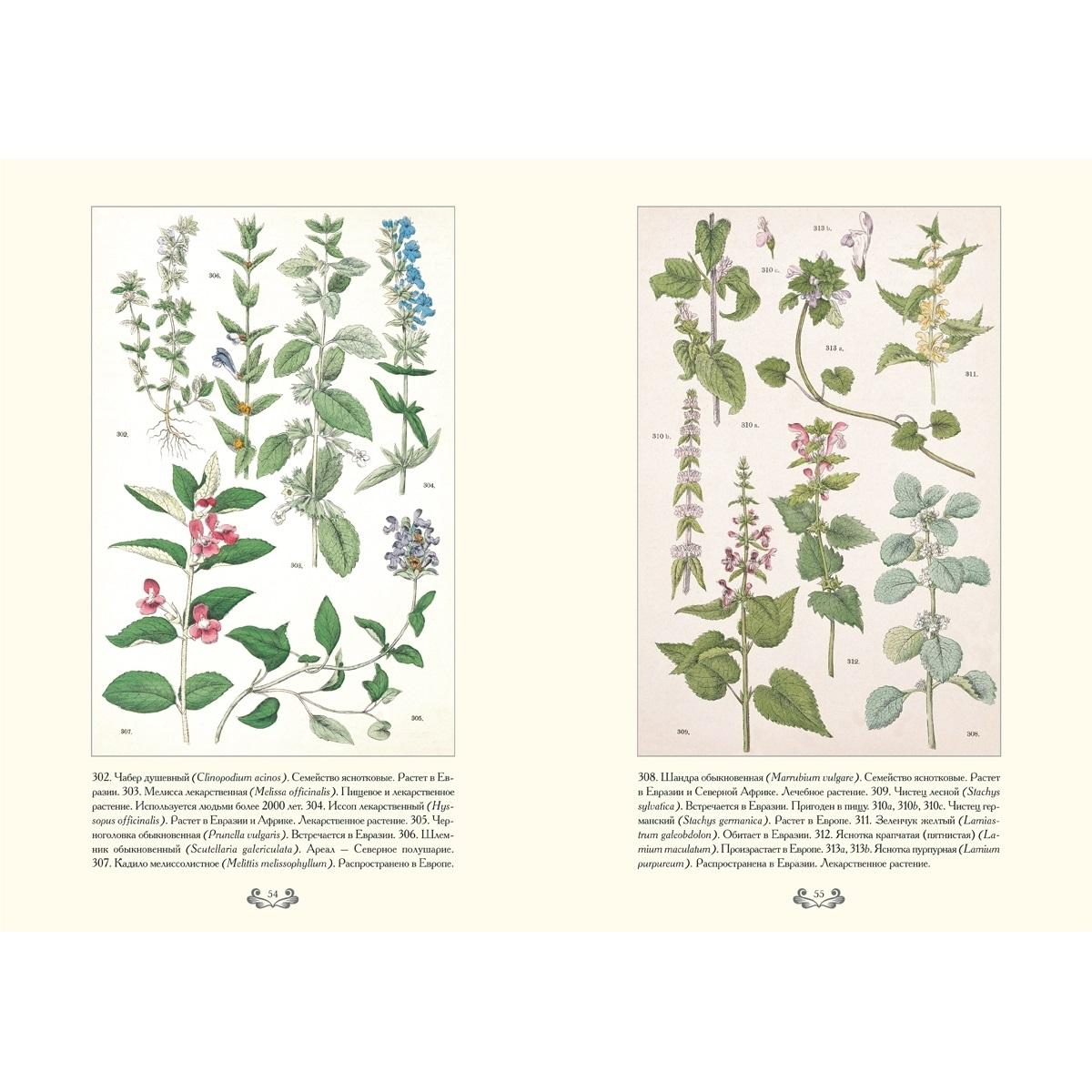 Картинки ботанический атлас растений021