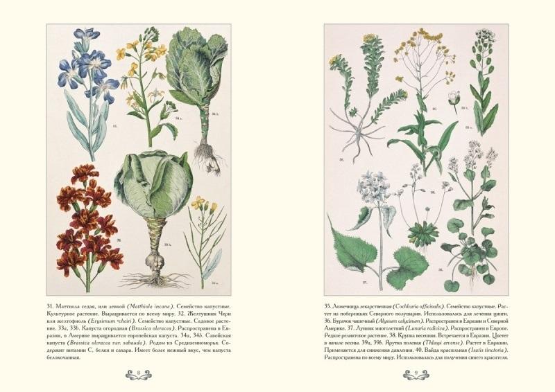 Картинки ботанический атлас растений023