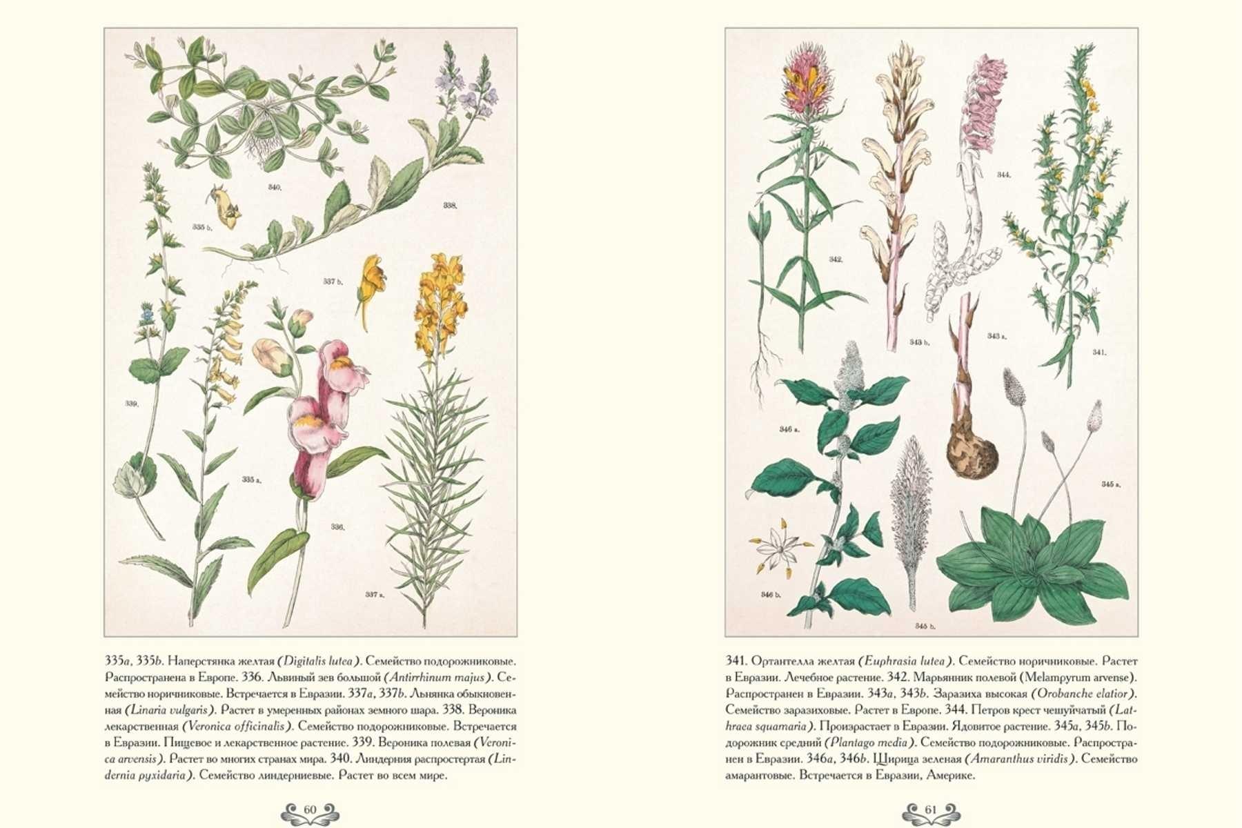 Картинки ботанический атлас растений025