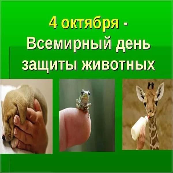 Картинки на всемирный день животных 4 октября004