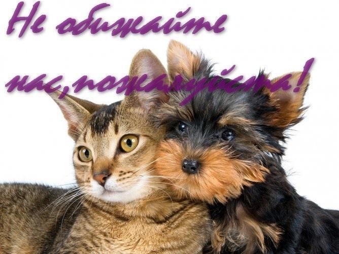 Картинки на всемирный день животных 4 октября010