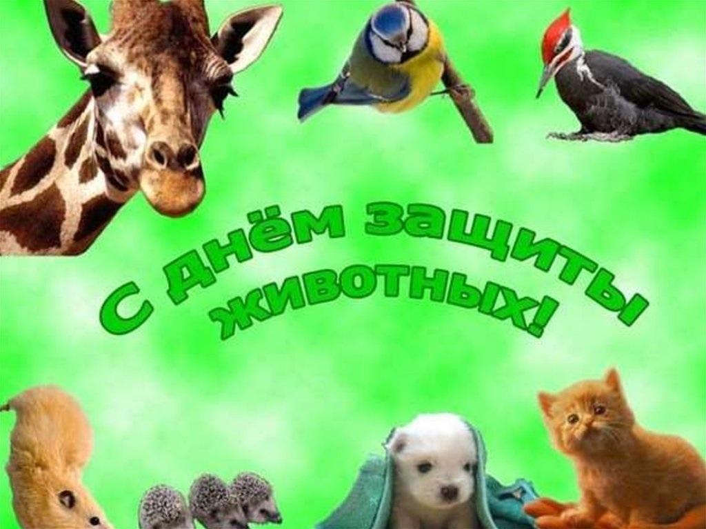 Картинки на всемирный день животных 4 октября017
