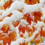Картинки на рабочий стол октябрь первый снег