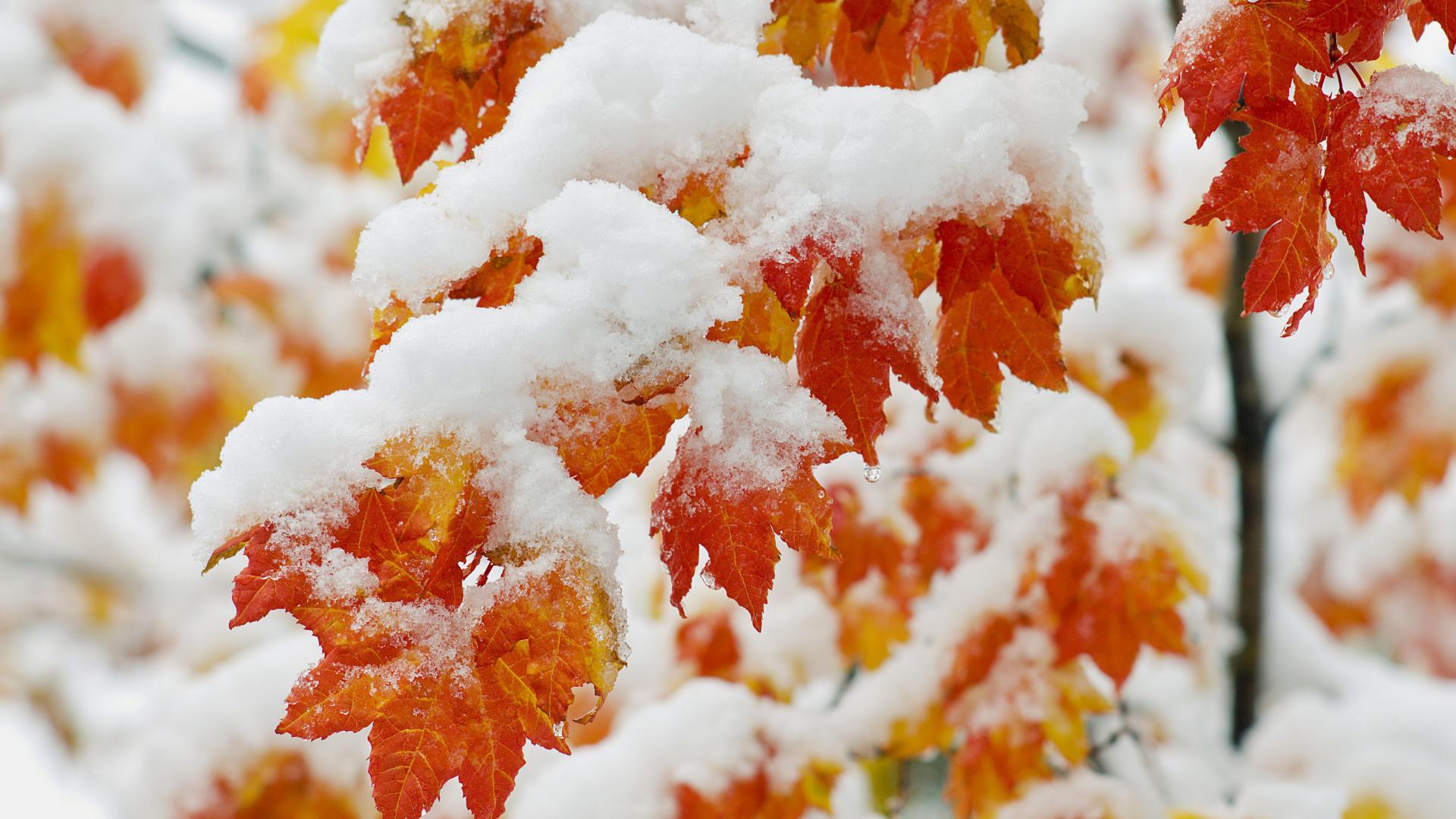 Картинки на рабочий стол октябрь первый снег (1)