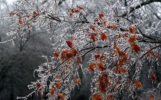 Картинки на рабочий стол осень и зима (3)