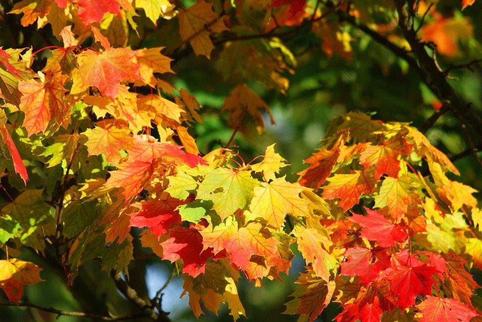 Картинки на тему красавица осень - подборка (15)