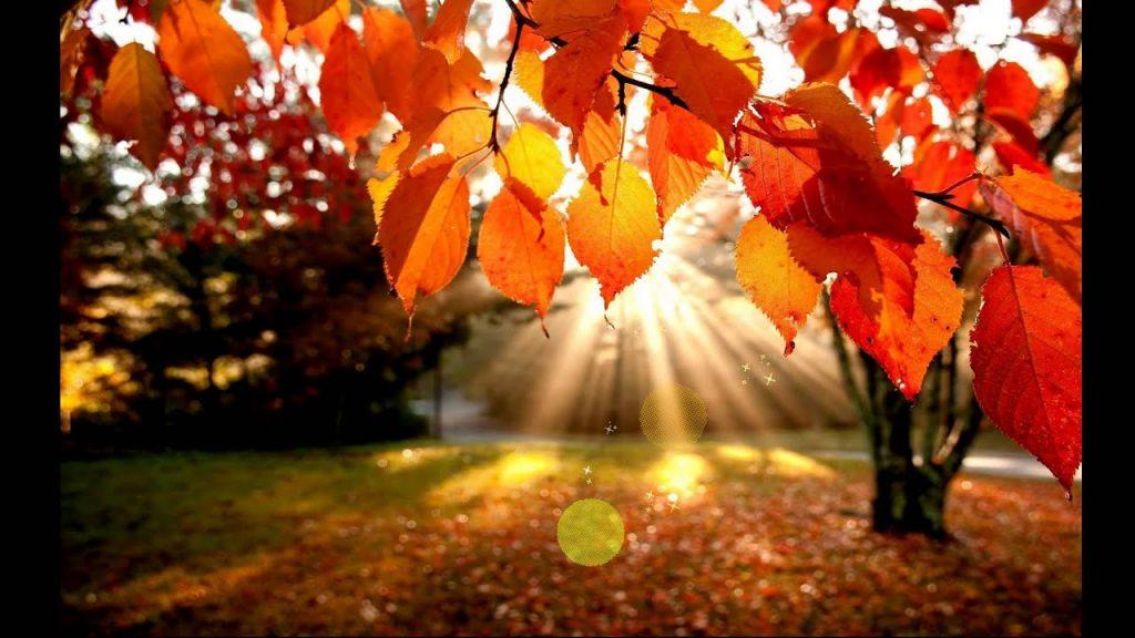 Картинки на тему красавица осень - подборка (17)