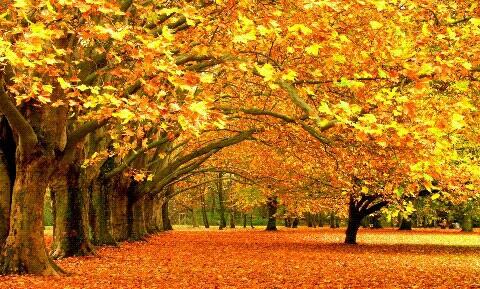 Картинки на тему красавица осень - подборка (18)
